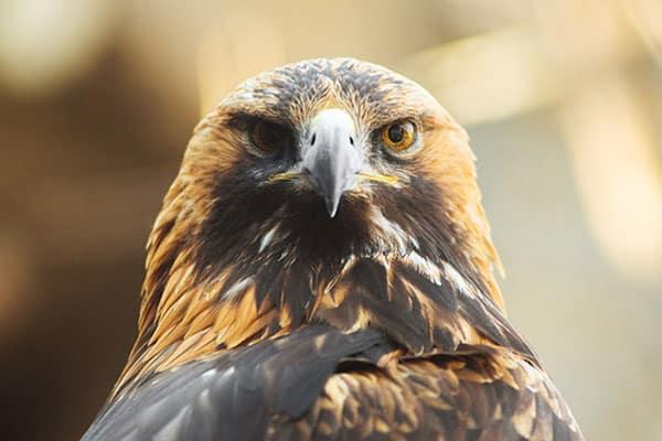 Wat-te-doen-in-Bulgarije-Activiteiten-Vogelspotten